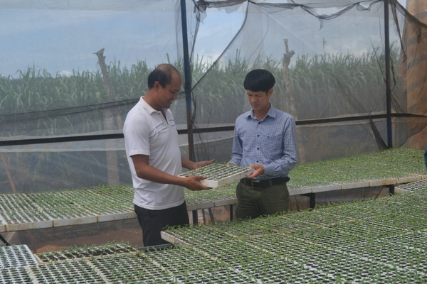 trồng ớt chuông công nghệ cao