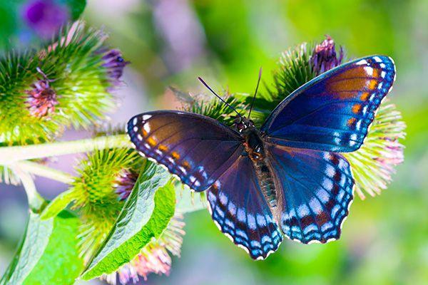 nằm mơ thấy bươm bướm điềm báo gì sẽ xảy ra với bạn