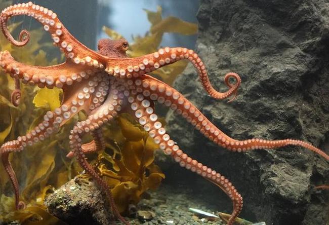 mơ thấy bạch tuộc