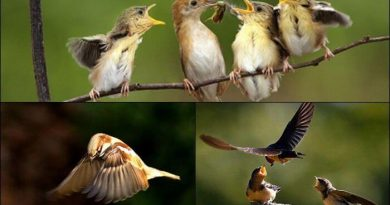 mo thay chim