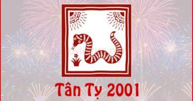 Xem bói vận hạn Tân Tỵ năm 2020 nam mạng