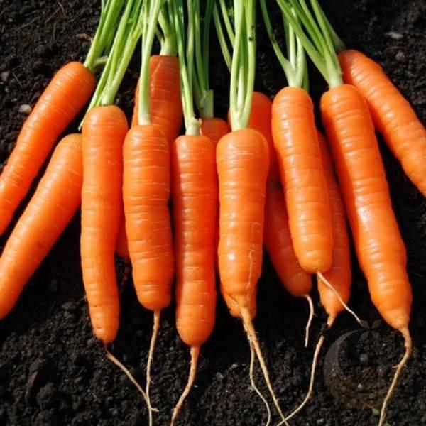 Nằm mơ thấy củ cà rốt đánh số mấy