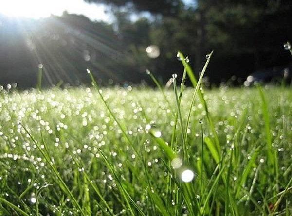 Mơ thấy cỏ là điềm báo gì?